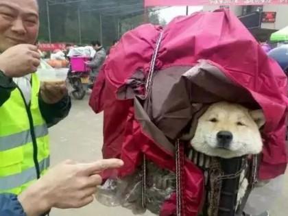 春运摩托车大军中主人给狗狗留个位置,养十年了,带它回家过年